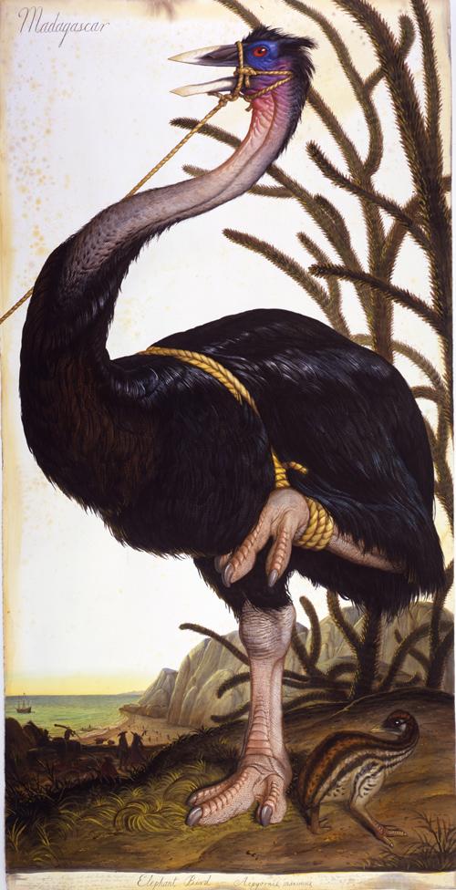 Beutiful Amazing Hot Wallpapers John James Audubon