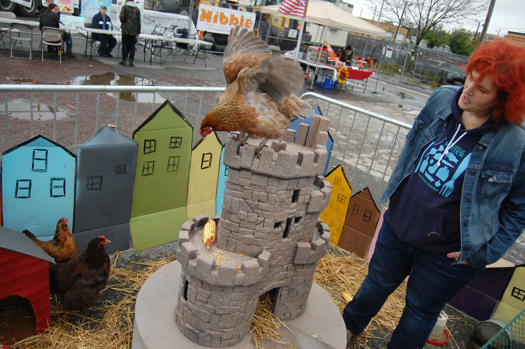 One of Ellien Laramie-Byers's hens flies down from the Prospect Hill Tower replica. (Greg Cook)
