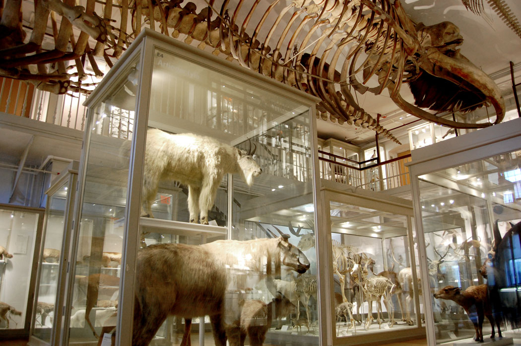 Harvard Museum of Natural History in Cambridge, March 26, 2017. (Greg Cook)