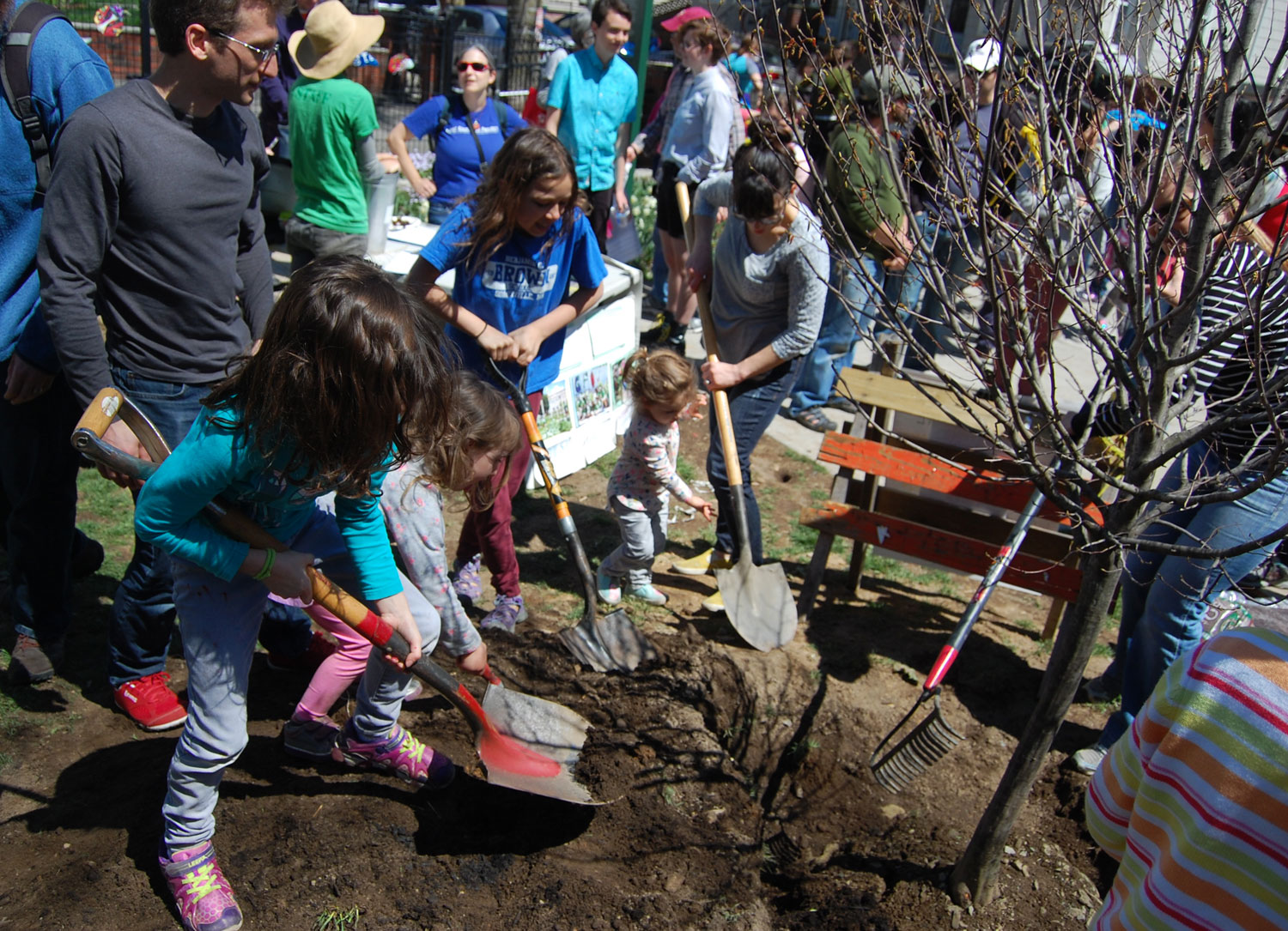 "Planting a tree during the 2017 ""Tiny Great Outdoors Festival."" (Greg Cook)"