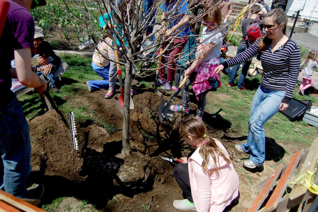 Planting a tree. (Greg Cook)