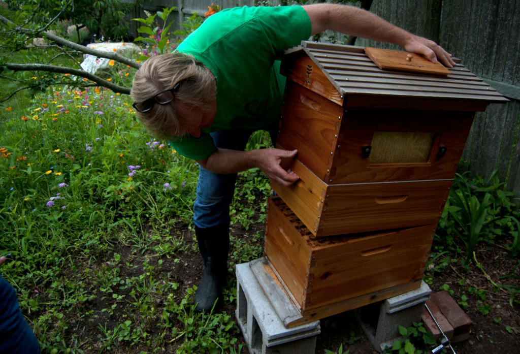 "Jason Grow checks his flow hive on Marble Road, Gloucester during Backyard Growers' ""Incredible Edible Downtown Garden Tour,"" July 15, 2017. (Greg Cook)"