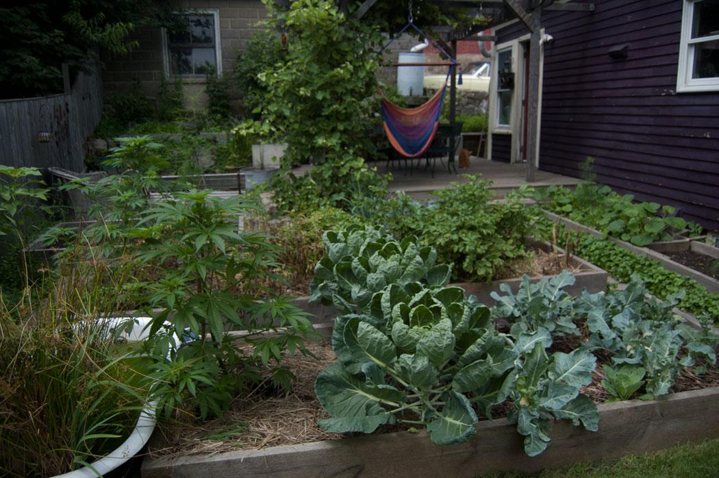 Backyard Growers Urban Garden Tour Wonderland