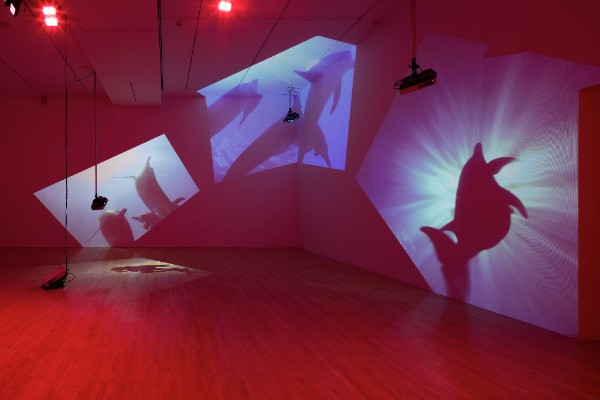 "Installation view of Diana Thater's 1999 ""Delphine."" (Courtesy ICA)"