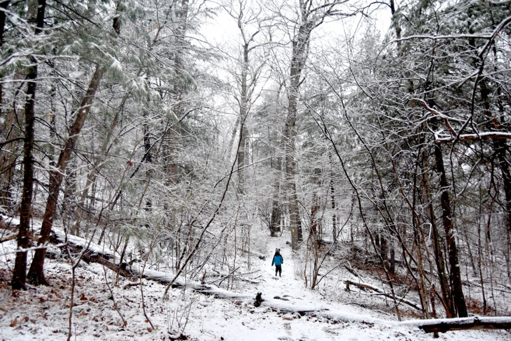Trail to the Cascade in the Middlesex Fells, Melrose, March 23, 2020. (Greg Cook)