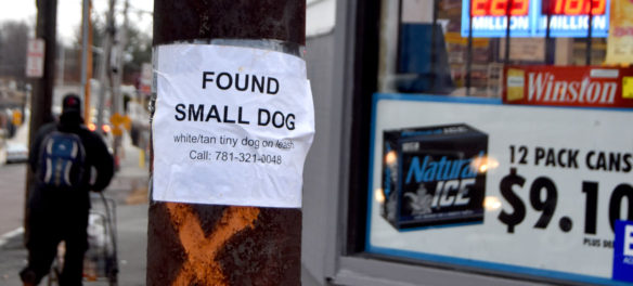 """Found Small Dog: white/tan tiny dog on leash"" sign seen in Malden, Massachusetts, Feb. 16, 2018. (Greg Cook)"