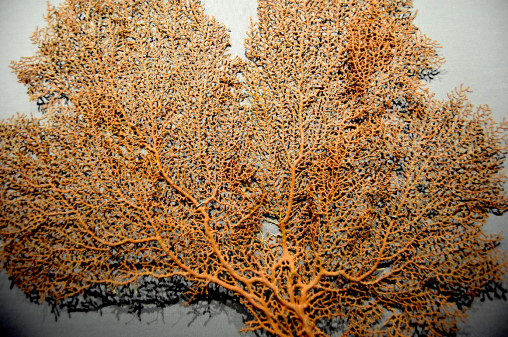 """A sea fan at the Boston Museum of Science exhibit """"A Mirror Maze."""" (Greg Cook)"""