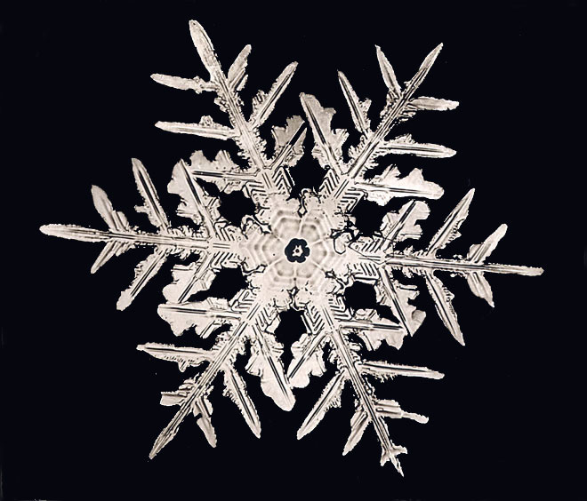 Wilson Bentley photo of a dendrite star snowflake. (Smithsonian Institution Archives)