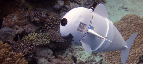 'SoFi,' a soft robotic fish developed by MIT's Computer Science and Artificial Intelligence Laboratory to independently swim alongside real fish in the ocean. (MIT CSAIL)