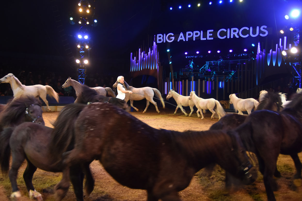 Animal trainer Jenny Vidbel performs with 16 horses and ponies during the Big Apple Circus. (Greg Cook)