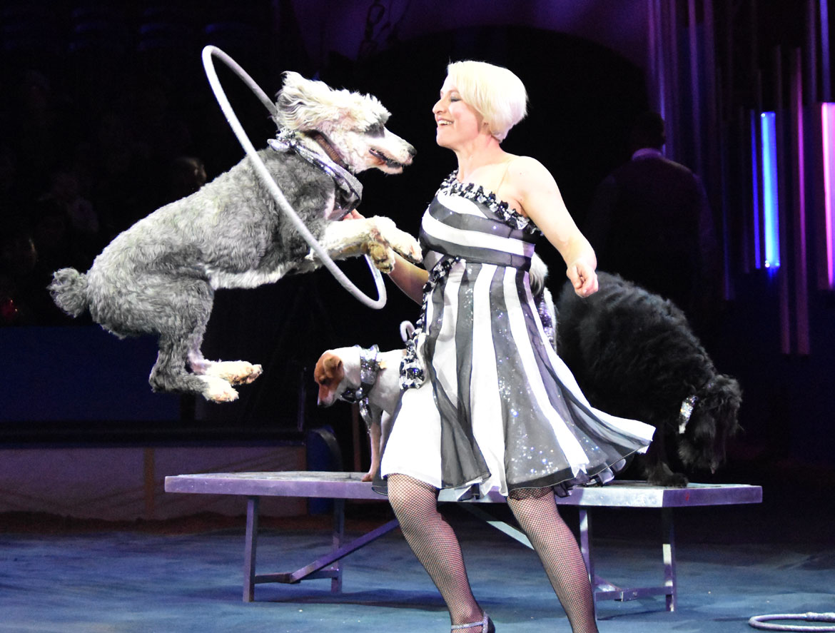 Animal trainer Jenny Vidbel performs with six rescue dogs during the Big Apple Circus. (Greg Cook)