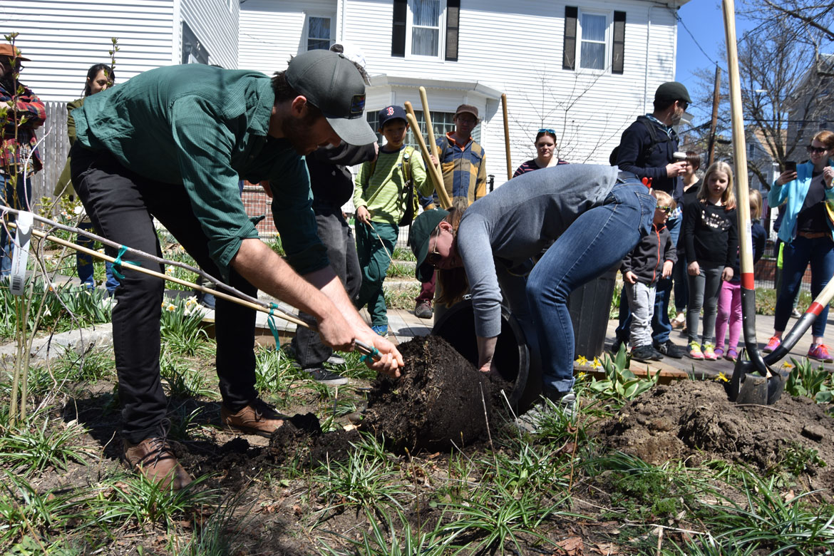 Planting a tree with City of Somerville Urban Forestry and Landscape Planner Vanessa Boukili (right) at the Starting Over Festival, Somerville, April 22, 2018. (Greg Cook)