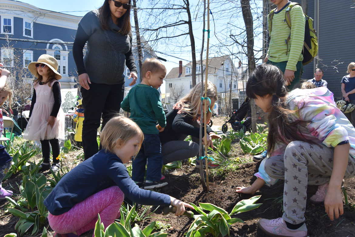 Planting a tree at the Starting Over Festival, Somerville, April 22, 2018. (Greg Cook)