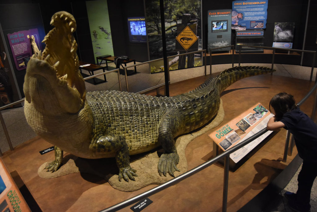 "Model of Gomek, once said to be ""the largest alligator in captivity,"" in ""Crocs"" at Boston's Museum of Science. Captured in 1968 in the upper Fly River of Papua New Guinea. It's shown in wildlife parks in Australia and then St. Augustine, Florida. It was believed to be six decades old, 17 feet, 9 inches long, and weighing nearly 2,000 pounds when it died in 1997. (Greg Cook)"