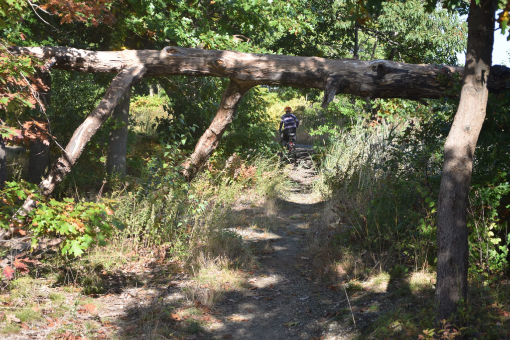 A fallen tree over a path just off the main part of the Northern Strand Bike Trail in Saugus, Massachusetts. Oct. 10, 2018. (Greg Cook)