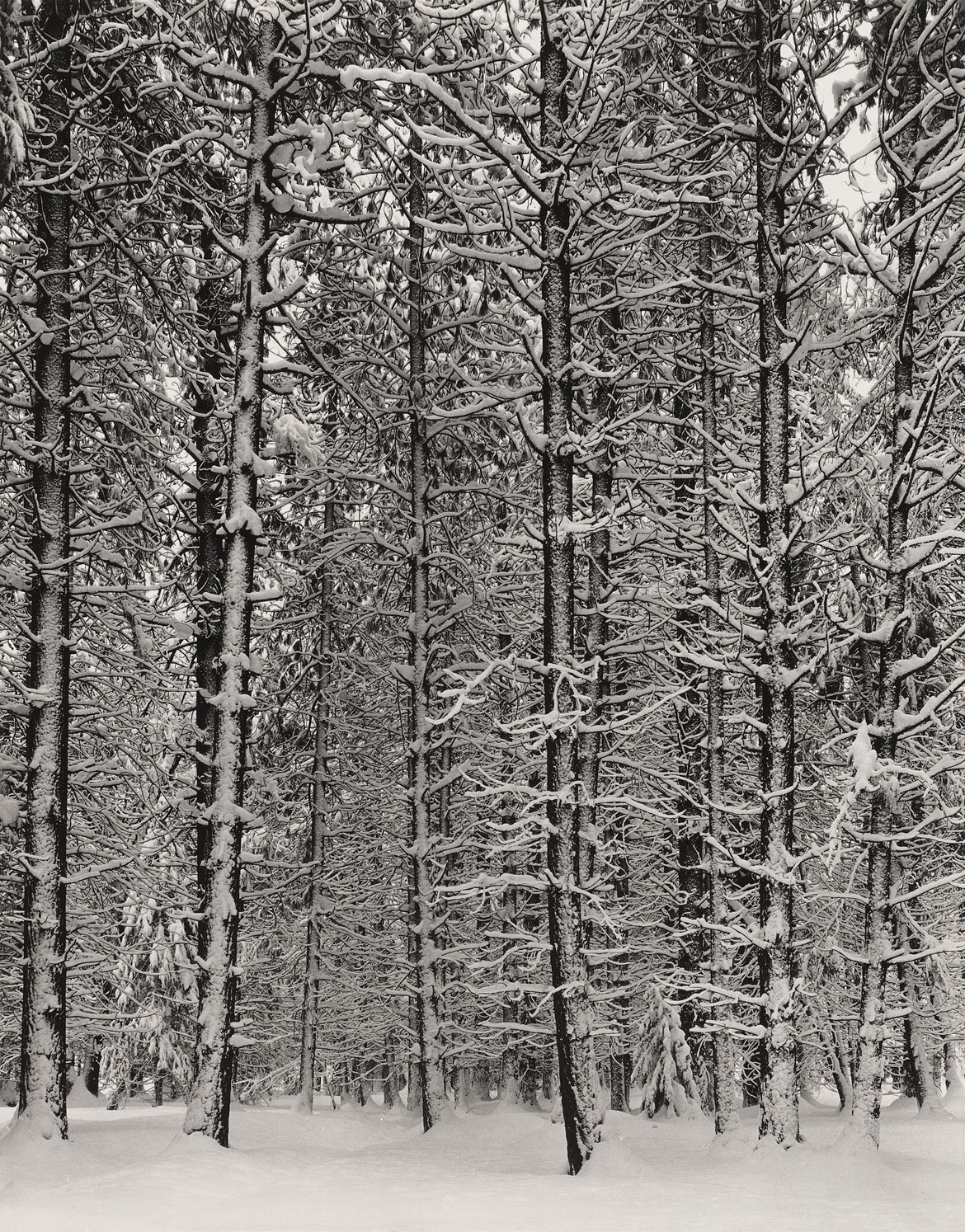 Reckoning With Ansel Adams's Photos Of A Mythic, Pristine American