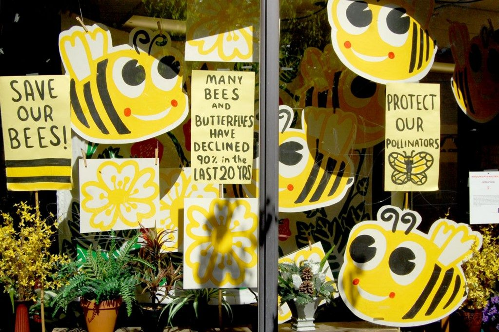 "Greg Cook's ""Save Our Bees"" installation at Malden Access Television, Sep. 24, 2015. (Greg Cook)"