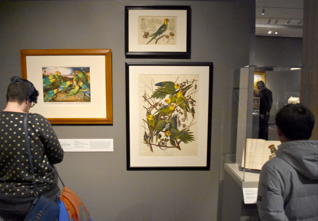 """Prints of the Carolina parrot by (clockwise from left) Walton Ford, Mark Catesby and John James Audubon in """"Nature's Nation: American Art and Environment"""" at Salem's Peabody Essex Museum. (Greg Cook)"""