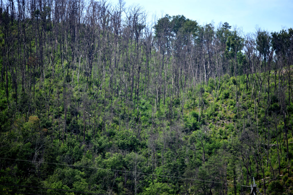 Burned trees remain visible on the mountains above the Parkway in Gatlinburg. Fourteen people died and more than 2,500 homes and businesses were damaged or destroyed in the fire that began in the surrounding Great Smoky Mountains National Park in November 2016. (Greg Cook, June 26, 2019)