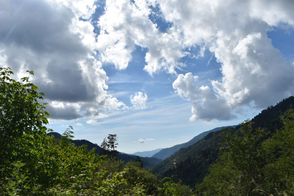 Great Smokey Mountains National Park, Tennessee to North Carolina, June 26, 2019. (Greg Cook)