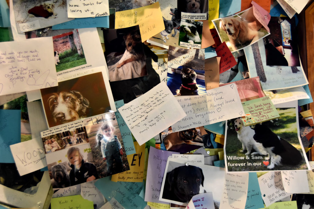 Notes tacked to the walls inside Stephen Huneck's Dog Chapel, St. Johnsbury, Vermont, Aug. 26, 2019. (Greg Cook)