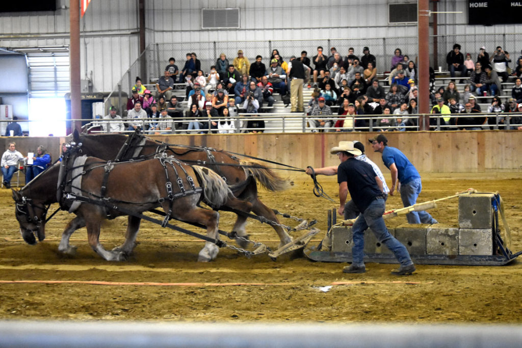 Horse pulling in the Arena, Topsfield Fair, Oct. 6, 2019. (Greg Cook photo)