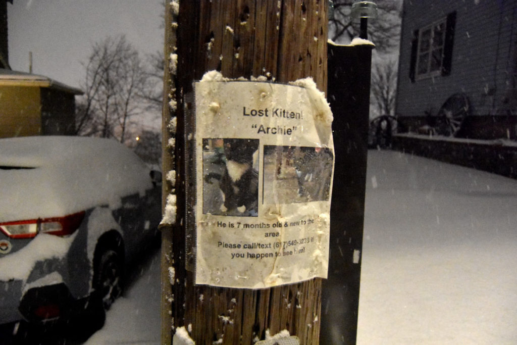 """""""Lost Kitten! 'Archie' He is 7 months old & new to the area."""" In Malden, Massachusetts, Dec. 18, 2020. (Greg Cook photo)"""
