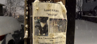 """Lost Kitten! 'Archie' He is 7 months old & new to the area."" In Malden, Massachusetts, Dec. 18, 2020. (Greg Cook photo)"