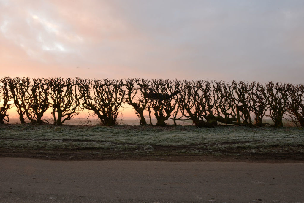 "Andy Goldsworthy, ""Hedge crawl / dawn / frost / cold hands, Sinderby, England, 4 March 2014,"" 2014. (© Andy Goldsworthy, courtesy Galerie Lelong & Co., New York)"