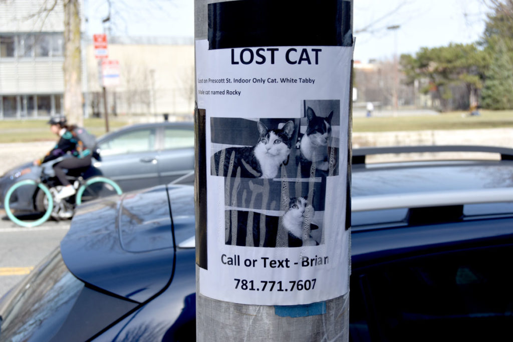 """""""Lost Cat"""" sign on Broadway, Cambridge, March 11, 2020. (Greg Cook photo)"""