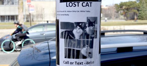 """Lost Cat"" sign on Broadway, Cambridge, March 11, 2020. (Greg Cook photo)"