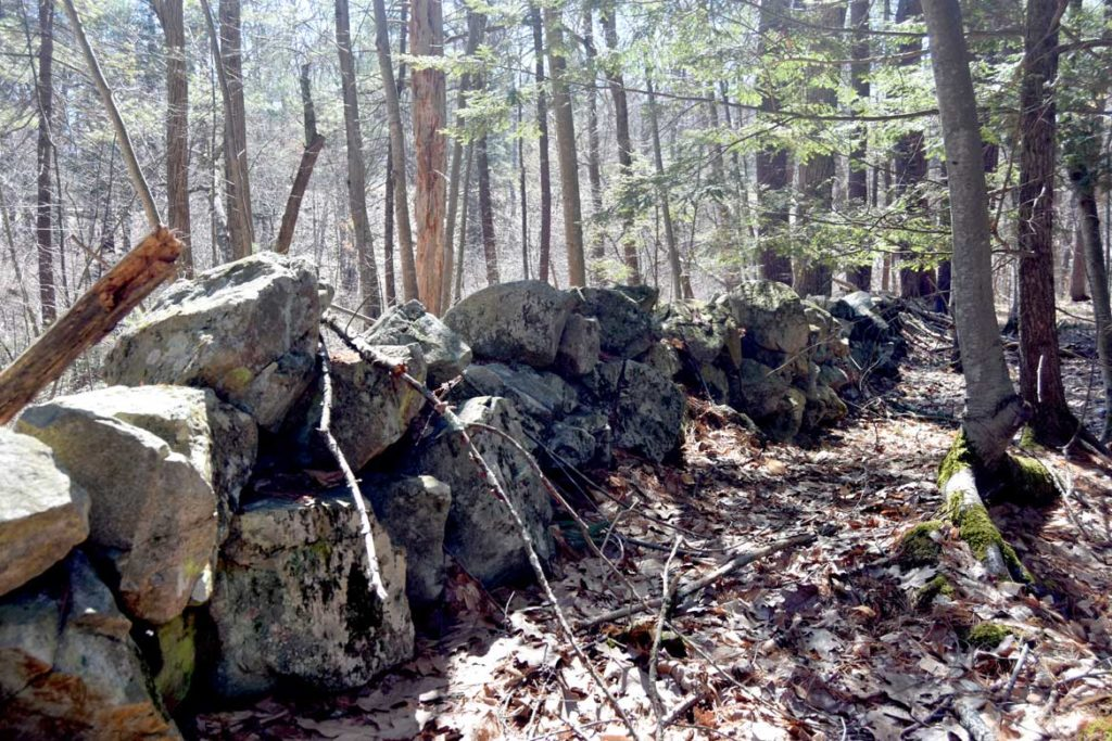 Old stone wall at Mount Misery in Lincoln, Massachusetts, March 26, 2020. (Greg Cook photo)