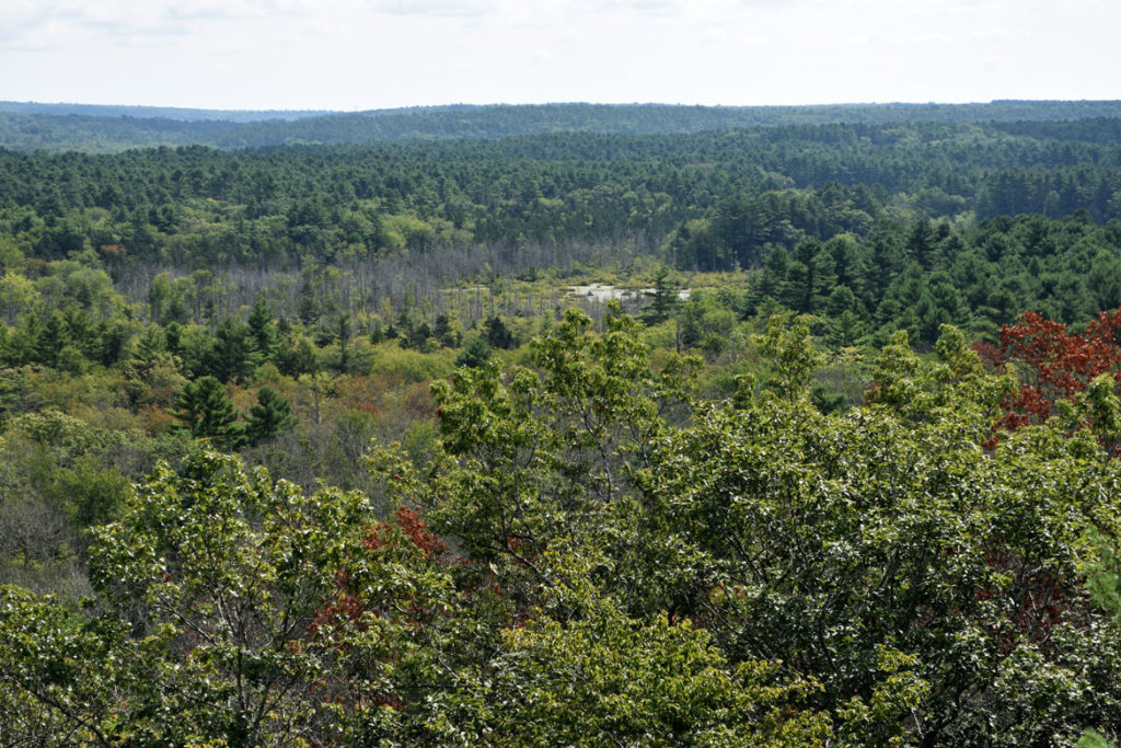 View from Mount Misery overlook in Pachaug State Forest, Connecticut, Aug. 25, 2018. (Greg Cook photo)