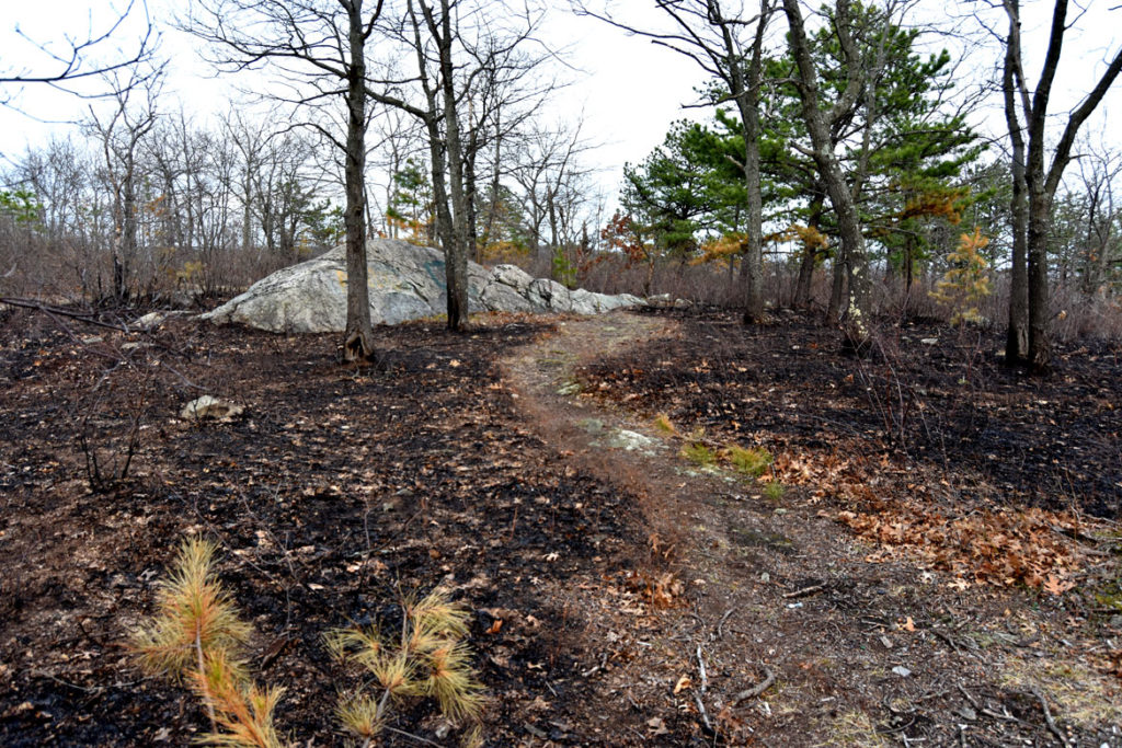 After a brush fire at Pine Banks Park in Melrose and Malden, April 20, 2020. (Greg Cook photo)