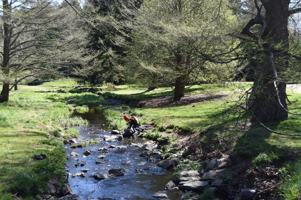 Arnold Arboretum, Boston, May 5, 2020. (Greg Cook photo)