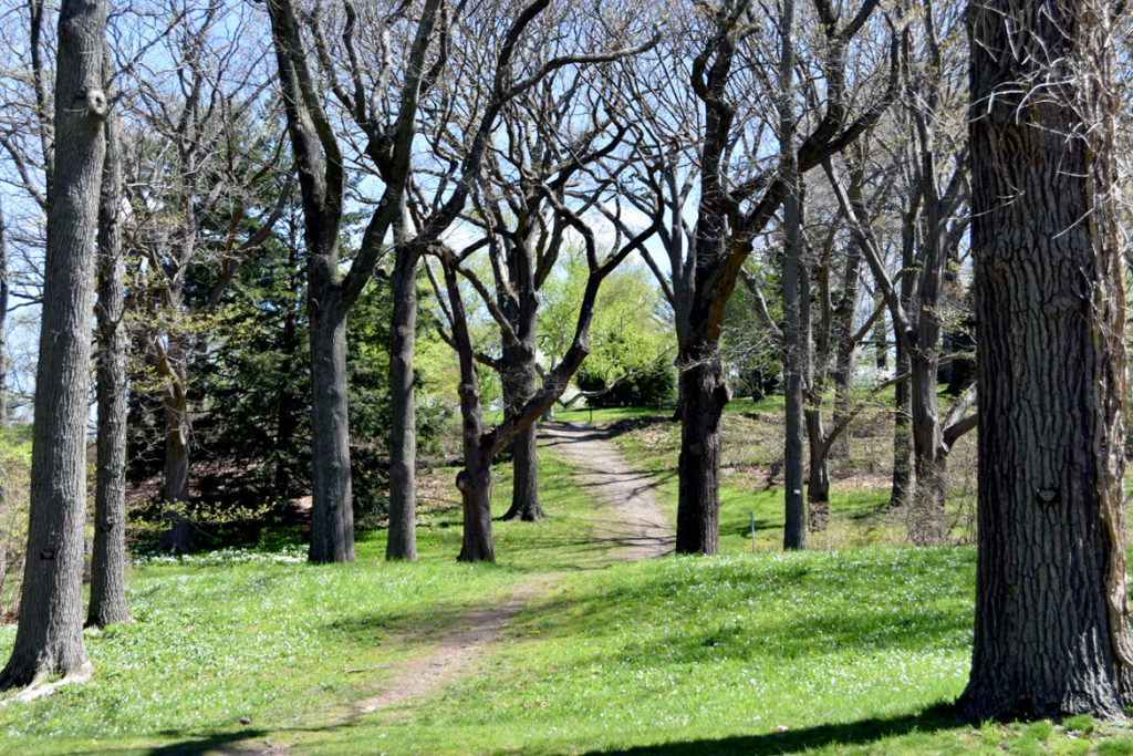 Arnold Arboretum, Boston, May 5, 2020. (Greg Cook photo)