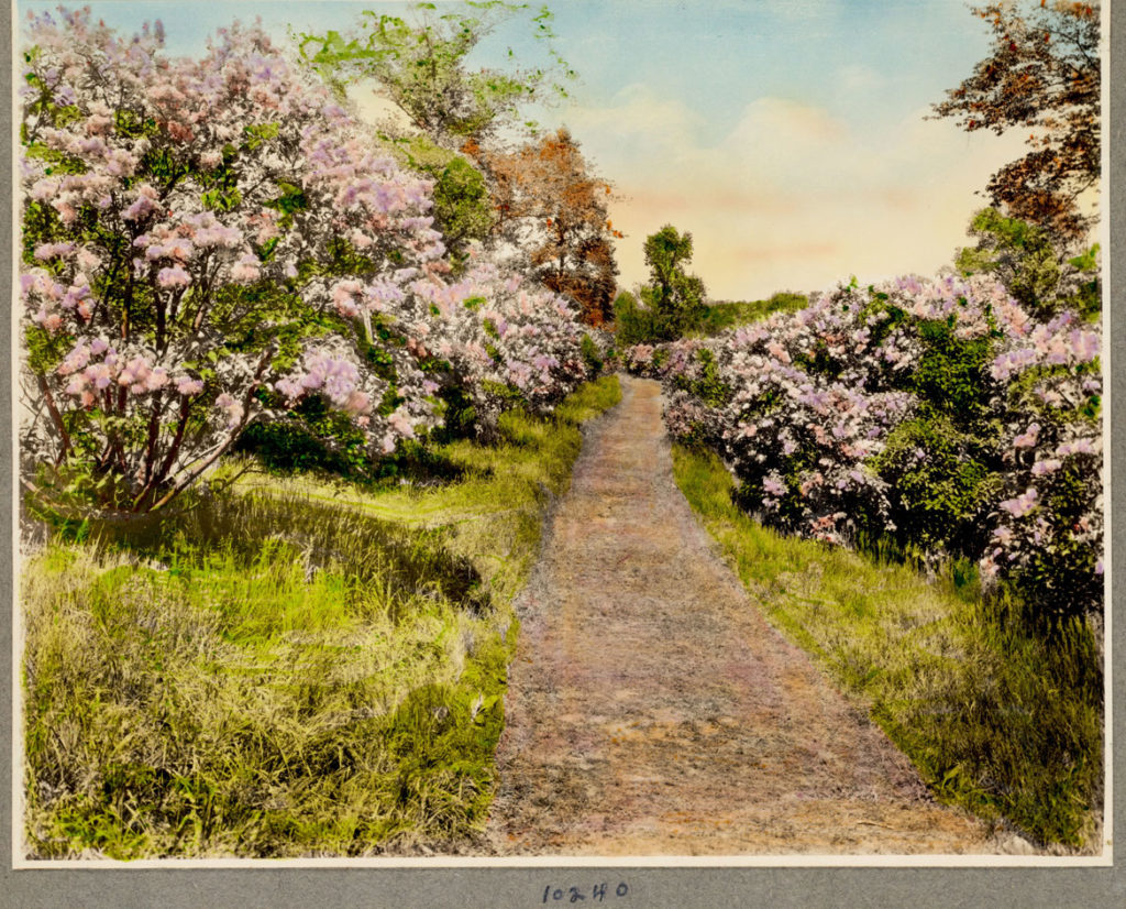 "Leon Abdalian and George Braun, ""Lilac view, Arnold Arboretum,"" June 3, 1939. (Boston Public Library Arts Department)"