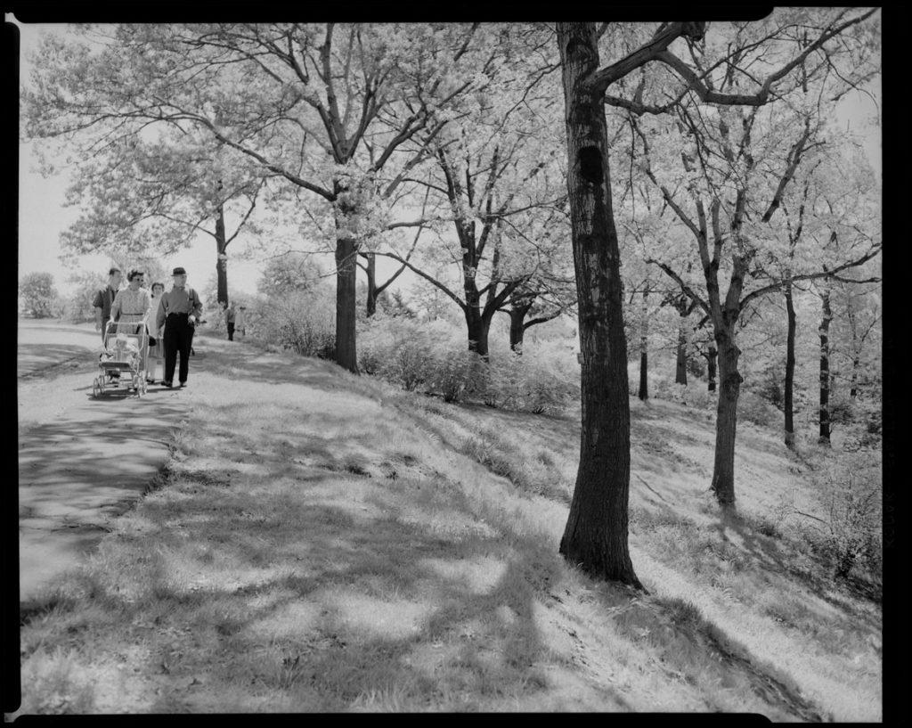 "Leon Abdalian, ""Arnold Arboretum,"" May 17, 1950. (Boston Public Library Arts Department)"
