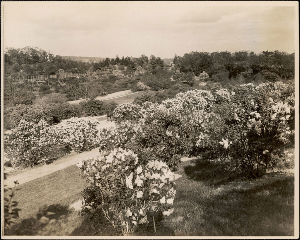 "Leon Abdalian, ""Bird's eye view of the lilacs, Arnold Arboretum,"" May 25, 1916. (Boston Public Library Arts Department)"