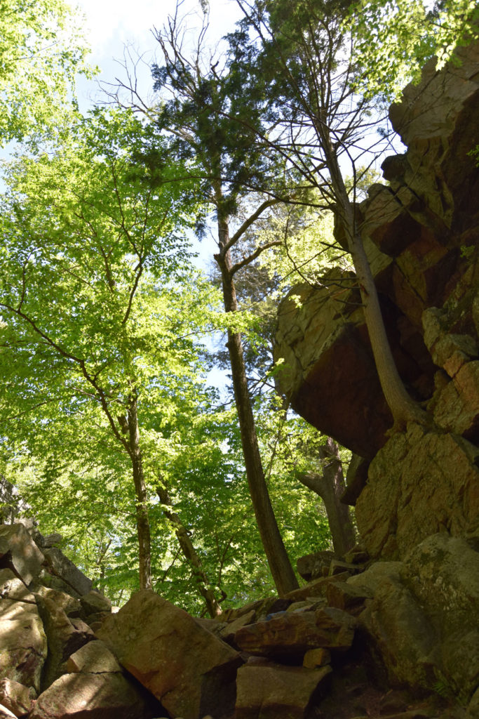 Lover's Leap at Purgatory Chasm, Sutton, Massachusetts, May 26, 2020. (Greg Cook photo)