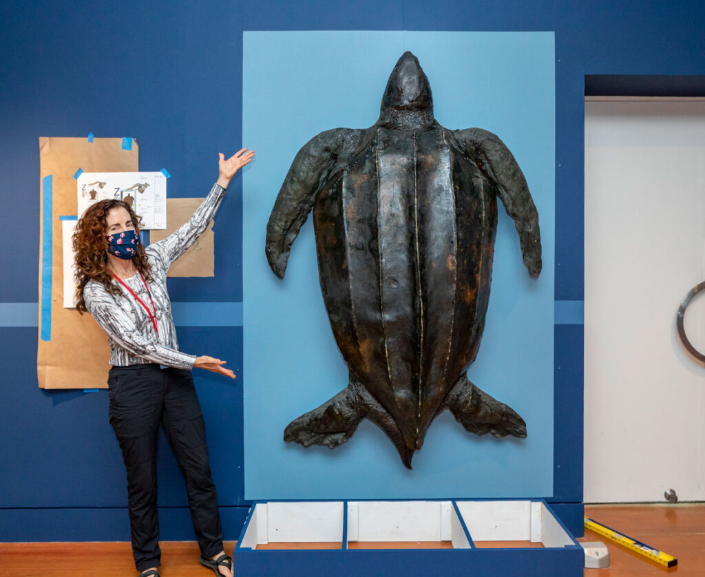 Janey Winchell, director of the Peabody Essex Museum's Art & Nature Center, with the leatherback turtle, 2020. (Photo: Kathy Tarantola)