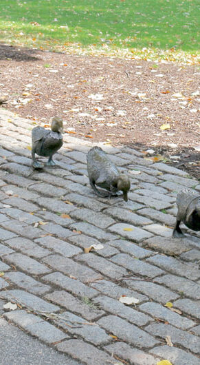 """""""Make Way for Ducklings"""" statues in Boston Public Garden outfitted with lacy collars in honor of Ruth Bader Ginsburg by Karyn Alzayer, Oct. 3, 2020. (Photo by Daud Alzayer)"""