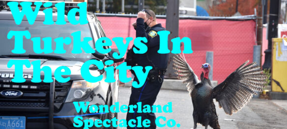 """Wild Turkeys in the City"" by Wonderland Spectacle Co. (Kari Percival and Greg Cook), November 2020. (©Greg Cook photo 2020)"
