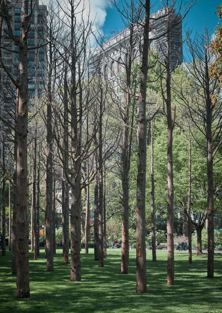 """Maya Lin, """"Ghost Forest,"""" 2021. (Courtesy the artist and Madison Square Park Conservancy / Photo credit: Andy Romer)"""