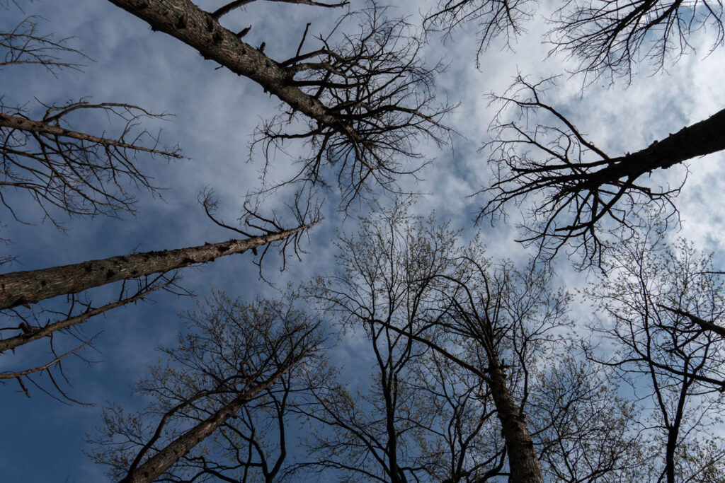 """Maya Lin, """"Ghost Forest,"""" 2021. (Courtesy the artist and Madison Square Park Conservancy / Photo credit: Rashmi Gill)"""