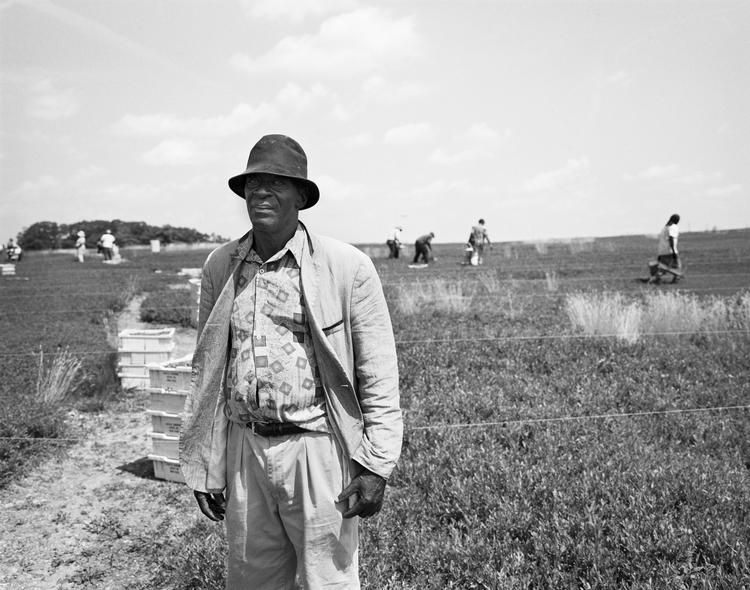 "S.B. Walker, ""Somali Blueberry Picker, Union,"" 2014. (Courtesy Center for Maine Contemporary Art)"