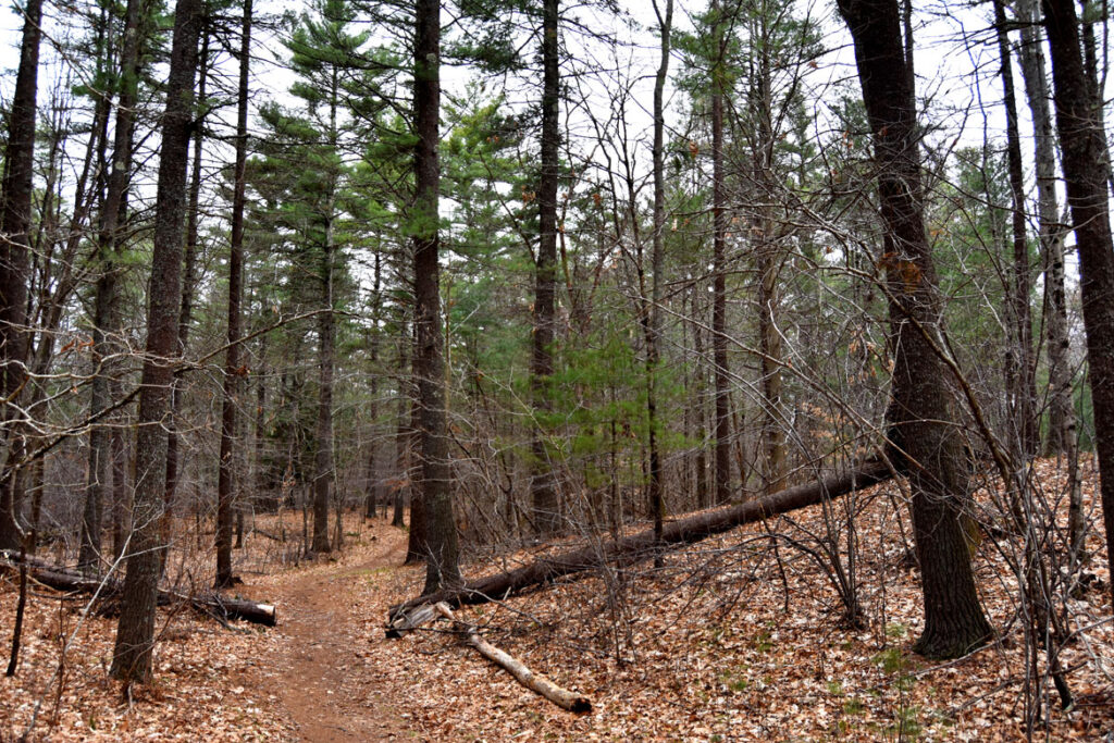 Willowdale State Forest, April 26, 2020. (©Greg Cook photo)