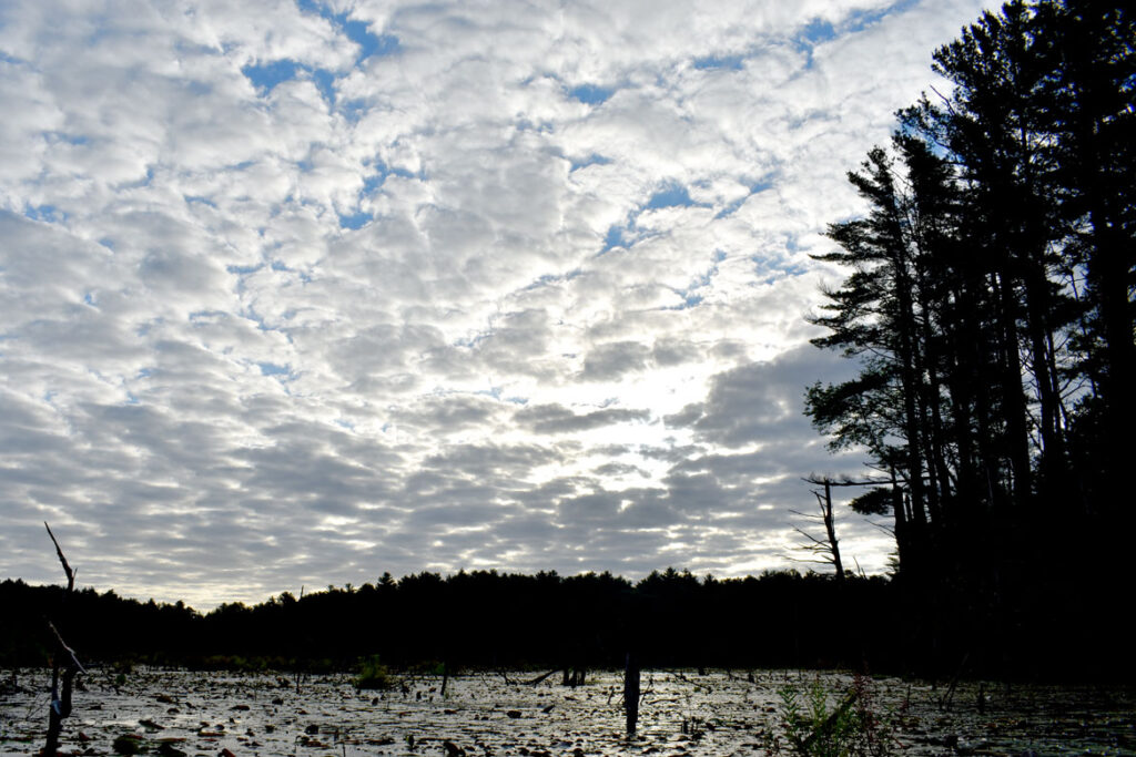 Sunrise at Willowdale State Forest, Sept. 19, 2021. (©Greg Cook photo)