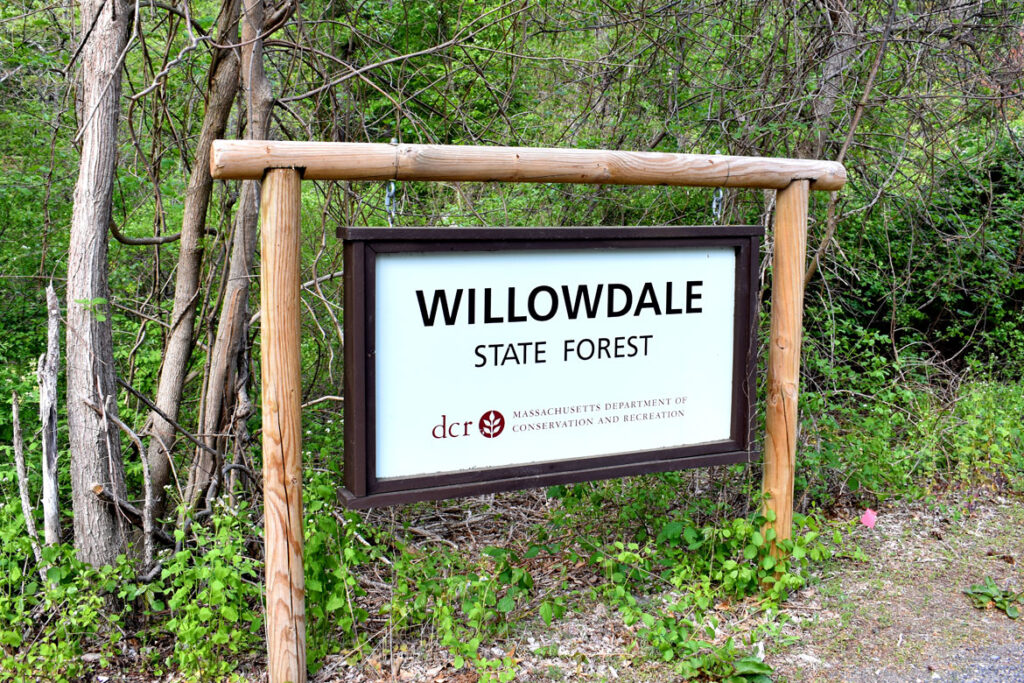 Willowdale State Forest, May 18, 2021. (©Greg Cook photo)
